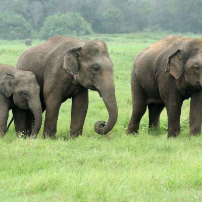 Elephant DNA: The Secret to Cancer Suppression?