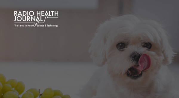 Pet Food: What Shouldn't Your Dog or Cat Eat?